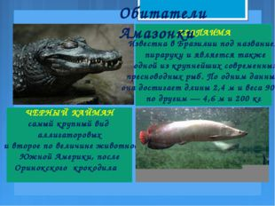 ЧЕРНЫЙ КАЙМАН самый крупный вид аллигаторовых и второе по величине животное Ю