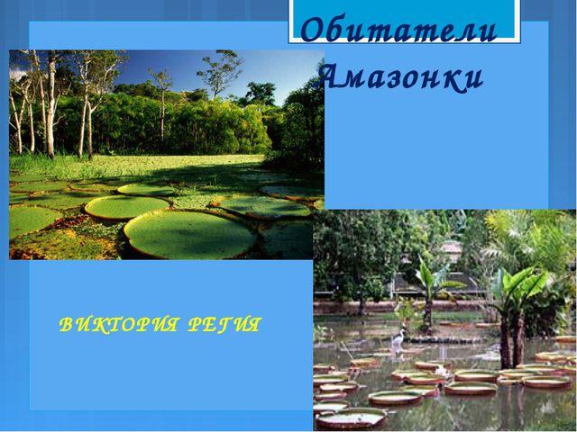 Обитатели Амазонки ВИКТОРИЯ РЕГИЯ
