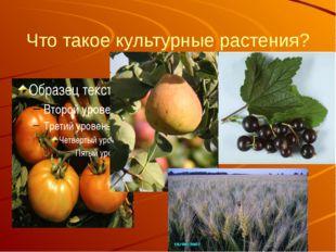 Что такое культурные растения?