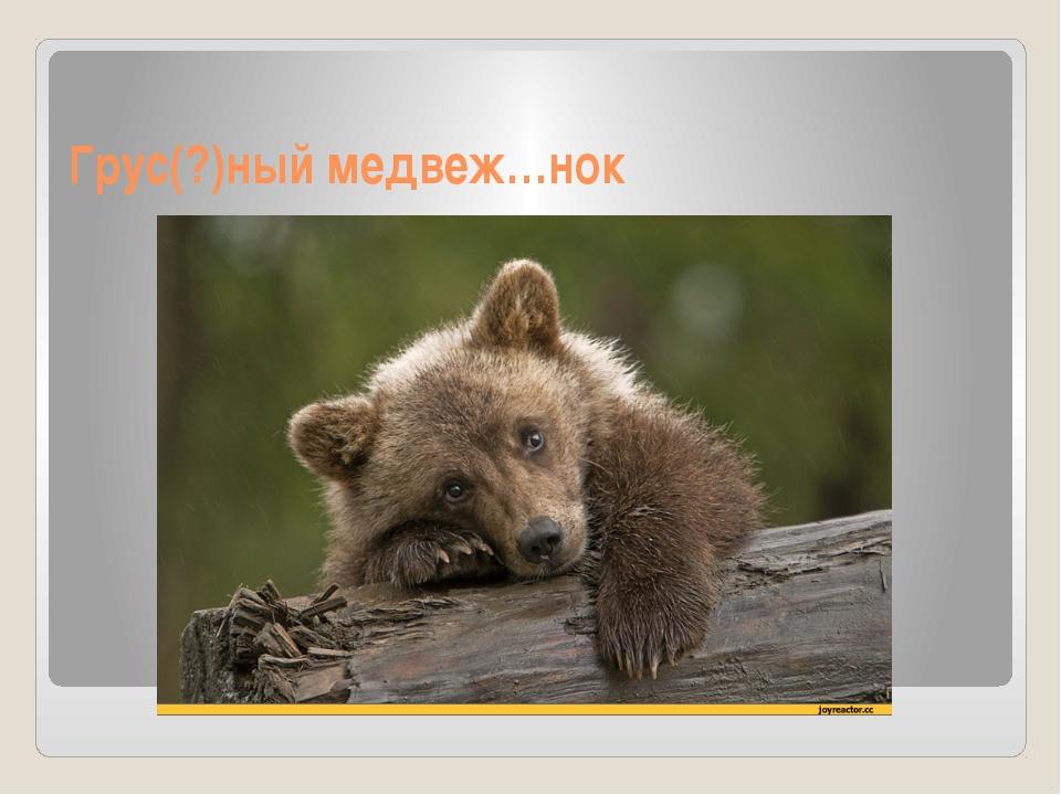 Грус(?)ный медвеж…нок