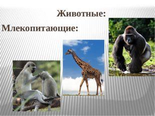 Животные: Млекопитающие: