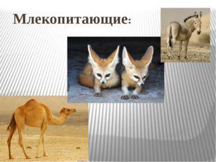 Млекопитающие: