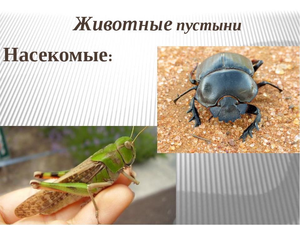 Животные пустыни Насекомые: