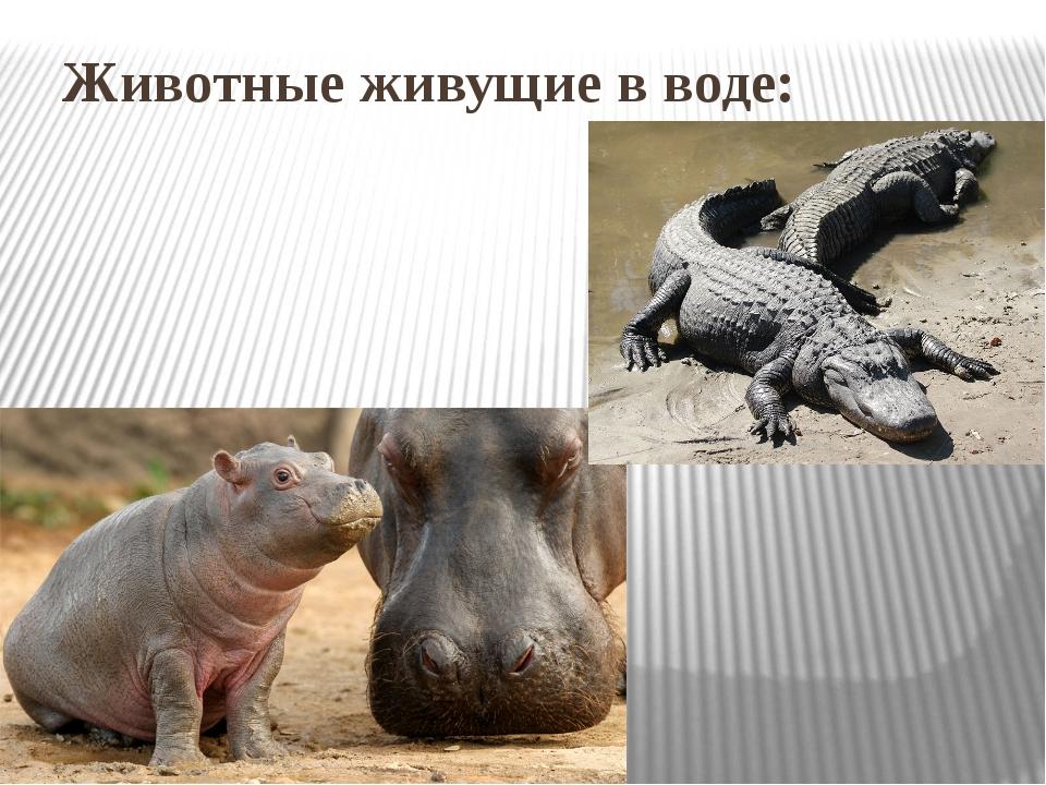 Животные живущие в воде: