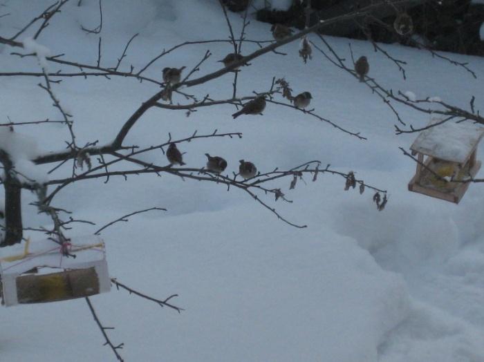 D:\Новая папка\птицы 022.jpg