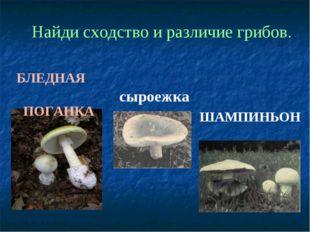 БЛЕДНАЯ ПОГАНКА сыроежка ШАМПИНЬОН Найди сходство и различие грибов.