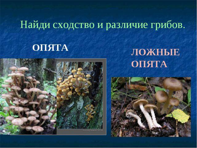ЛОЖНЫЕ ОПЯТА ОПЯТА Найди сходство и различие грибов.