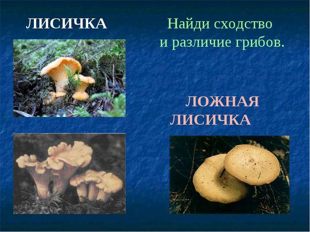 ЛОЖНАЯ ЛИСИЧКА ЛИСИЧКА Найди сходство и различие грибов.