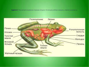 Задание 3. Рассмотрите внутренне строение лягушки. Используя учебник и рисун