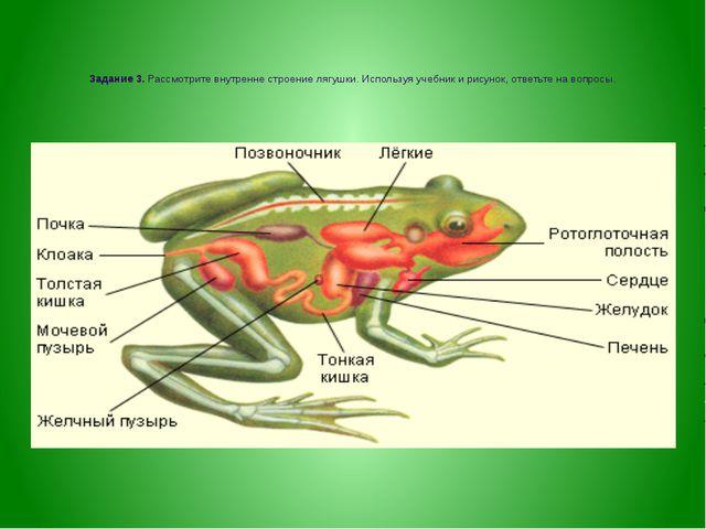 Задание 3. Рассмотрите внутренне строение лягушки. Используя учебник и рисун...