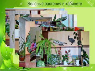 Зелёные растения в кабинете