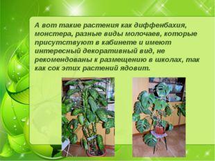 А вот такие растения как диффенбахия, монстера, разные виды молочаев, которые