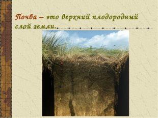 Почва – это верхний плодородный слой земли.