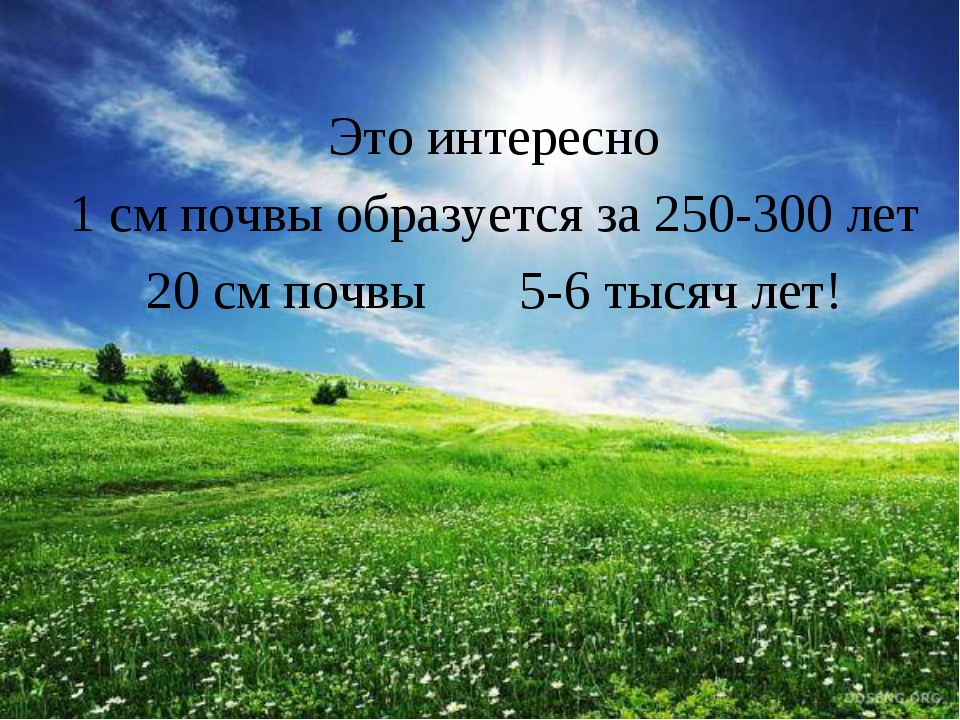 Это интересно 1 см почвы образуется за 250-300 лет 20 см почвы 5-6 тысяч лет!