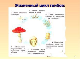 * Жизненный цикл грибов: кафедра педагогики и технологий образовательного про
