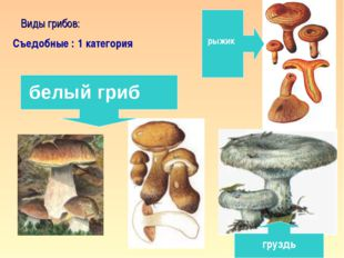 * Виды грибов: Съедобные : 1 категория белый гриб рыжик груздь кафедра педаго
