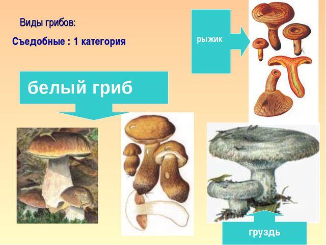 * Виды грибов: Съедобные : 1 категория белый гриб рыжик груздь кафедра педаго...
