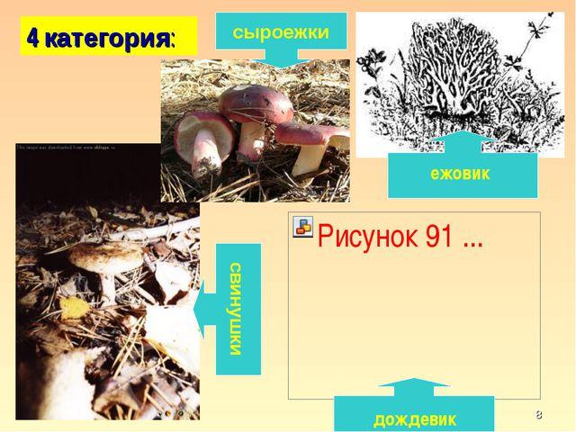 * 4 категория: свинушки сыроежки ежовик дождевик кафедра педагогики и техноло...