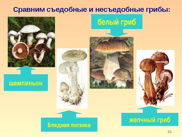 * Сравним съедобные и несъедобные грибы: белый гриб шампиньон Бледная поганка...