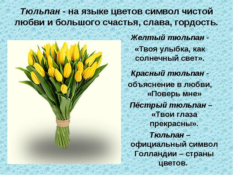Тюльпан - на языке цветов символ чистой любви и большого счастья, слава, горд...