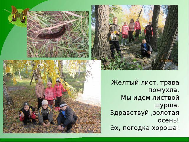 Желтый лист, трава пожухла, Мы идем листвой шурша. Здравствуй ,золотая осень...