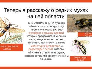 Теперь я расскажу о редких мухах нашей области В КРАСНУЮ КНИГУ Курской област