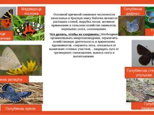 Основной причиной снижения численности занесенных в Красную книгу бабочек яв