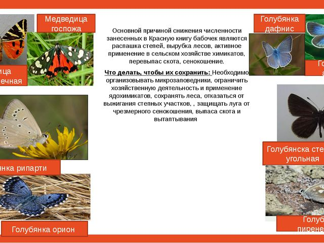 Основной причиной снижения численности занесенных в Красную книгу бабочек яв...