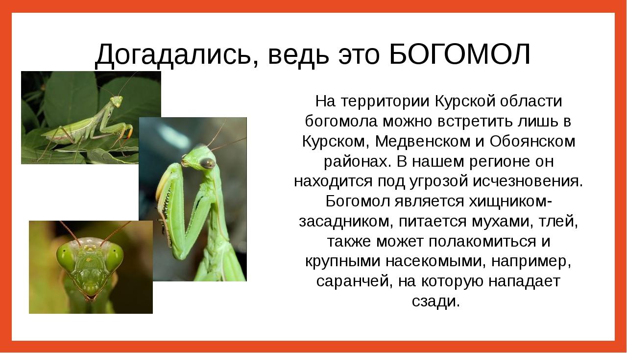 Догадались, ведь это БОГОМОЛ На территории Курской области богомола можно вст...