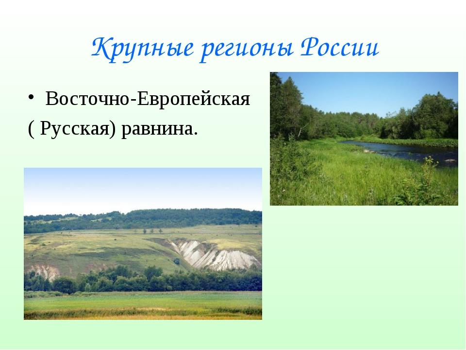 Крупные регионы России Восточно-Европейская ( Русская) равнина.