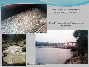 Река Кубань в районе Фёдоровского гидроузла.  Учёт рыбы в рыбоподъёмнике Фёд