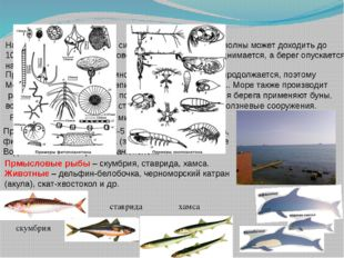 На Черном море случаются сильные штормы, высота волны может доходить до 10 м,