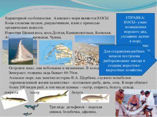 Характерной особенностью Азовского моря являются КОСЫ СПРАВКА: КОСЫ- узкие во