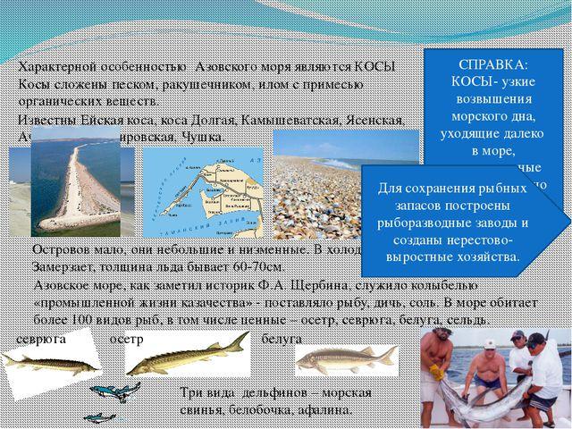Характерной особенностью Азовского моря являются КОСЫ СПРАВКА: КОСЫ- узкие во...