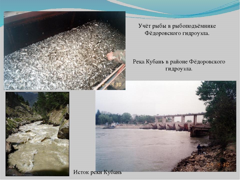 Река Кубань в районе Фёдоровского гидроузла.  Учёт рыбы в рыбоподъёмнике Фёд...