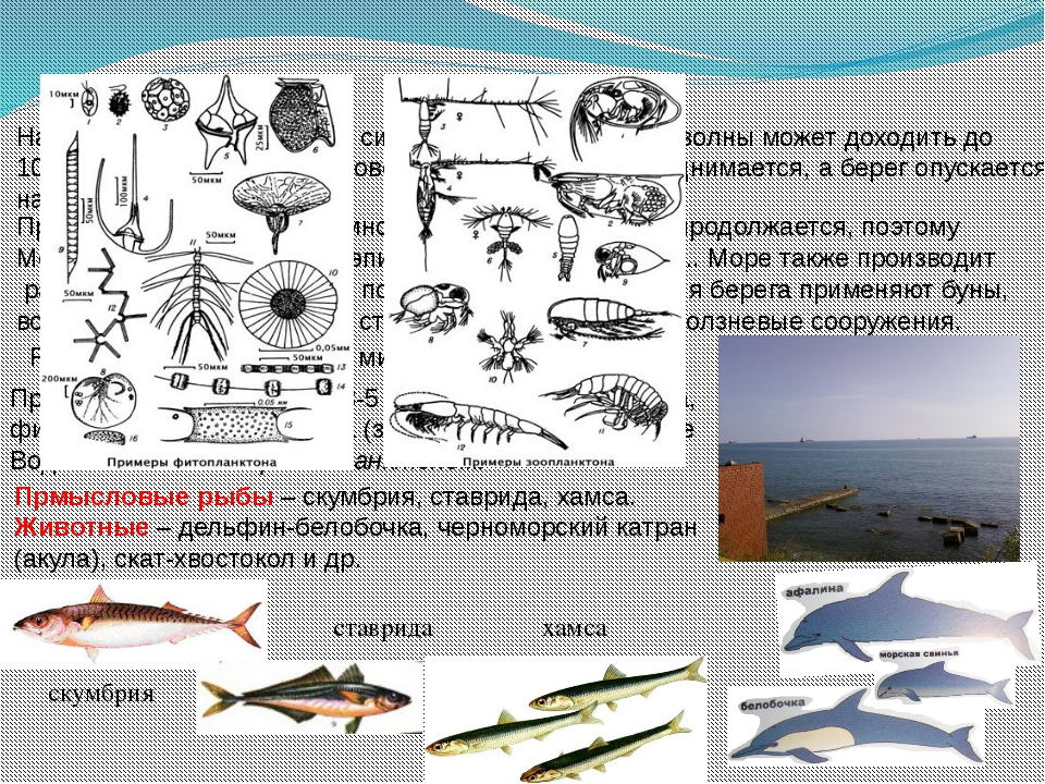 На Черном море случаются сильные штормы, высота волны может доходить до 10 м,...