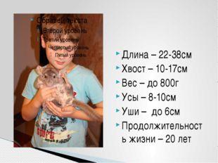 Длина – 22-38см Хвост – 10-17см Вес – до 800г Усы – 8-10см Уши – до 6см Продо