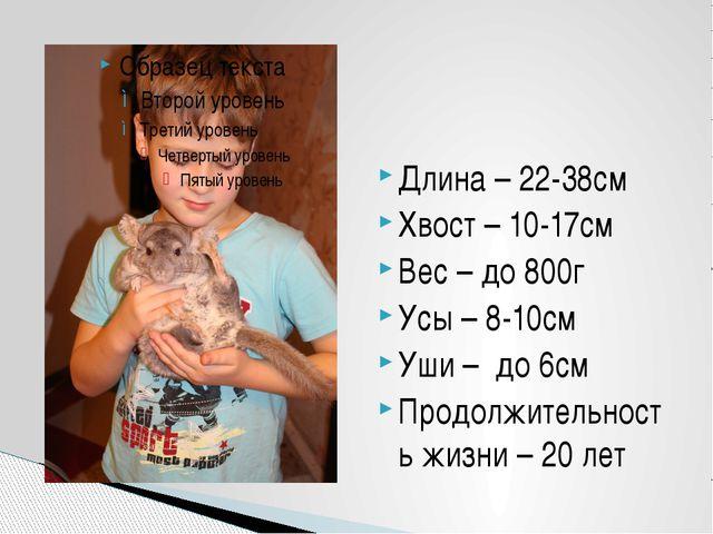 Длина – 22-38см Хвост – 10-17см Вес – до 800г Усы – 8-10см Уши – до 6см Продо...