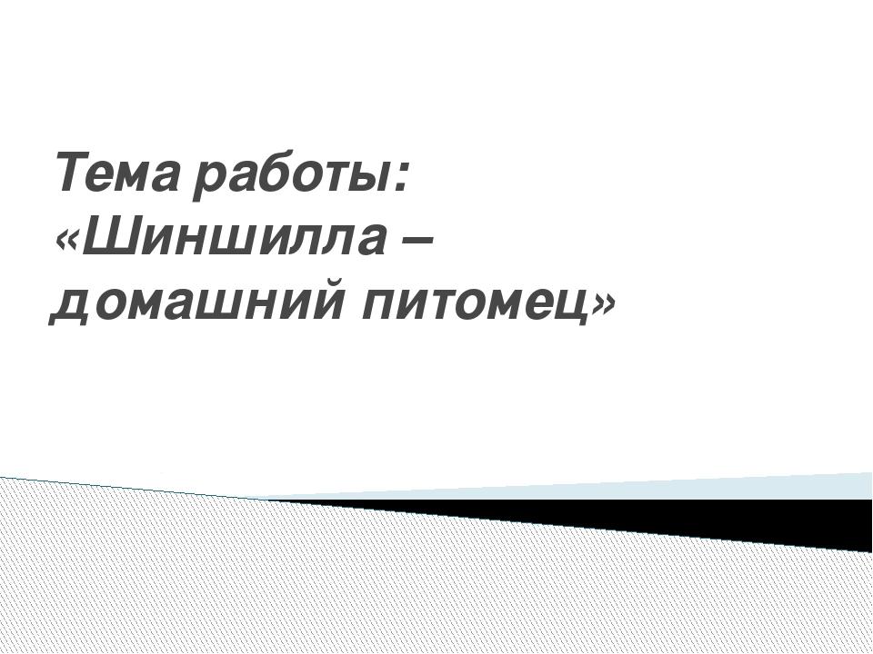 Тема работы: «Шиншилла – домашний питомец»