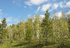 http://plantportal.com/data/Populus_tremuloides_9146.jpg