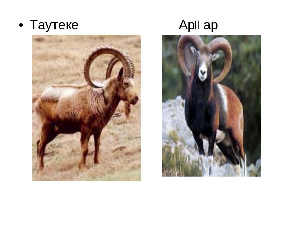 Таутеке Арқар
