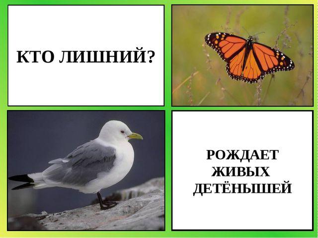 РОЖДАЕТ ЖИВЫХ ДЕТЁНЫШЕЙ КТО ЛИШНИЙ?