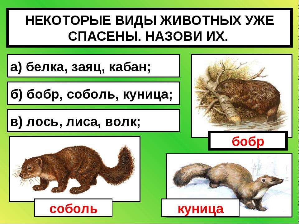 НЕКОТОРЫЕ ВИДЫ ЖИВОТНЫХ УЖЕ СПАСЕНЫ. НАЗОВИ ИХ. а) белка, заяц, кабан; б) боб...