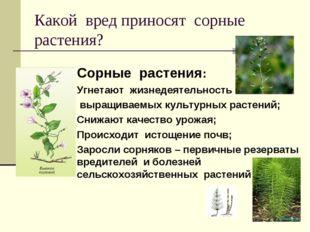 Какой вред приносят сорные растения? Сорные растения: Угнетают жизнедеятельно