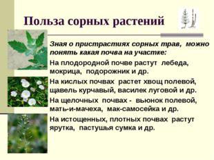 Польза сорных растений Зная о пристрастиях сорных трав, можно понять какая по