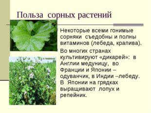 Польза сорных растений Некоторые всеми гонимые сорняки съедобны и полны витам