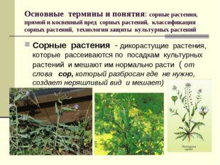 Основные термины и понятия: сорные растения, прямой и косвенный вред сорных р