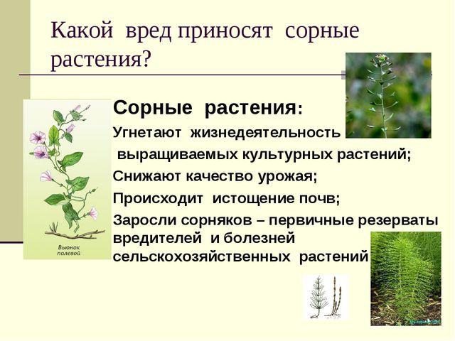 Какой вред приносят сорные растения? Сорные растения: Угнетают жизнедеятельно...