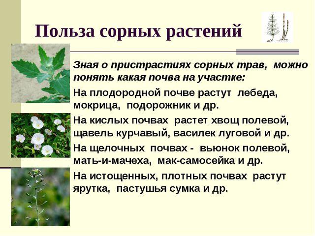 Польза сорных растений Зная о пристрастиях сорных трав, можно понять какая по...