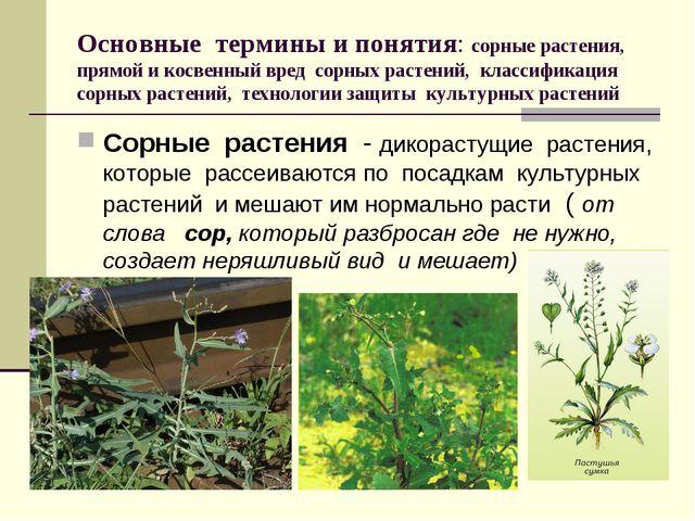 Основные термины и понятия: сорные растения, прямой и косвенный вред сорных р...